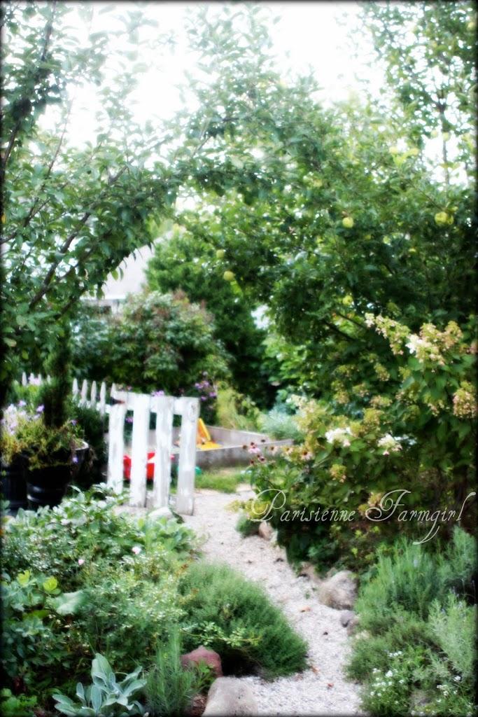 A Late Summer's Garden