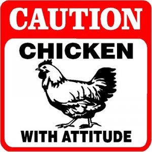 The Straight Poop…Chicken that is…