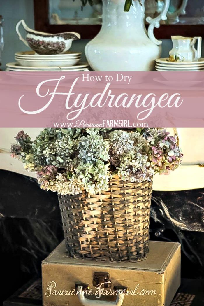 How to Dry Hydrangea