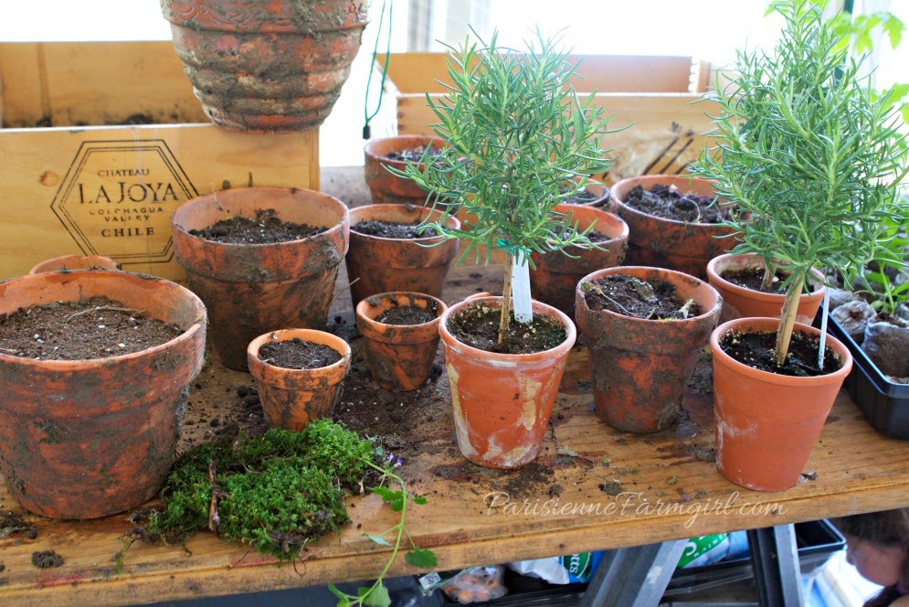 Today in the Greenhouse – Making Moss Paint