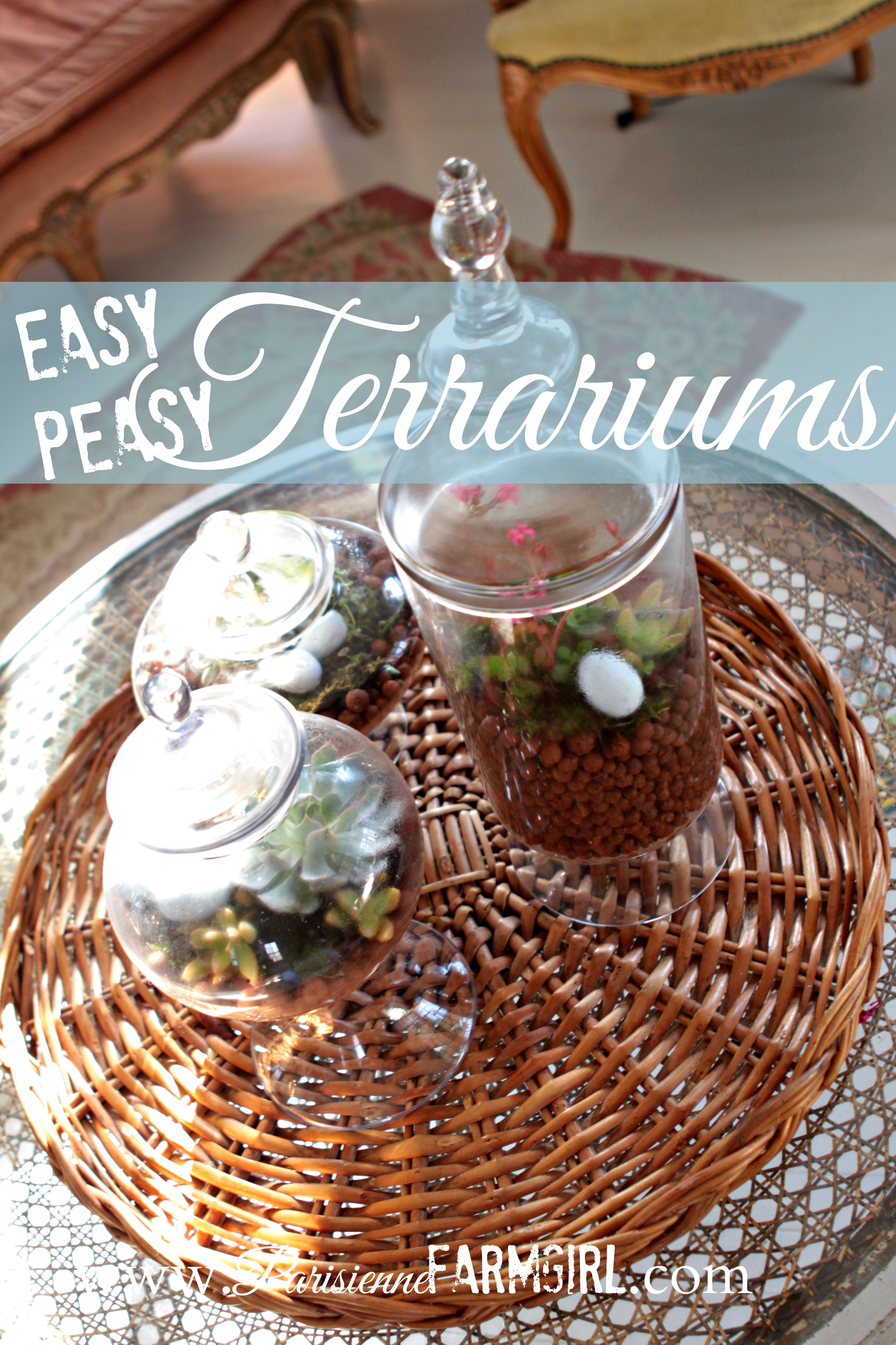 Tres Simple Terrariums