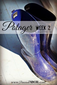 Potager week 2