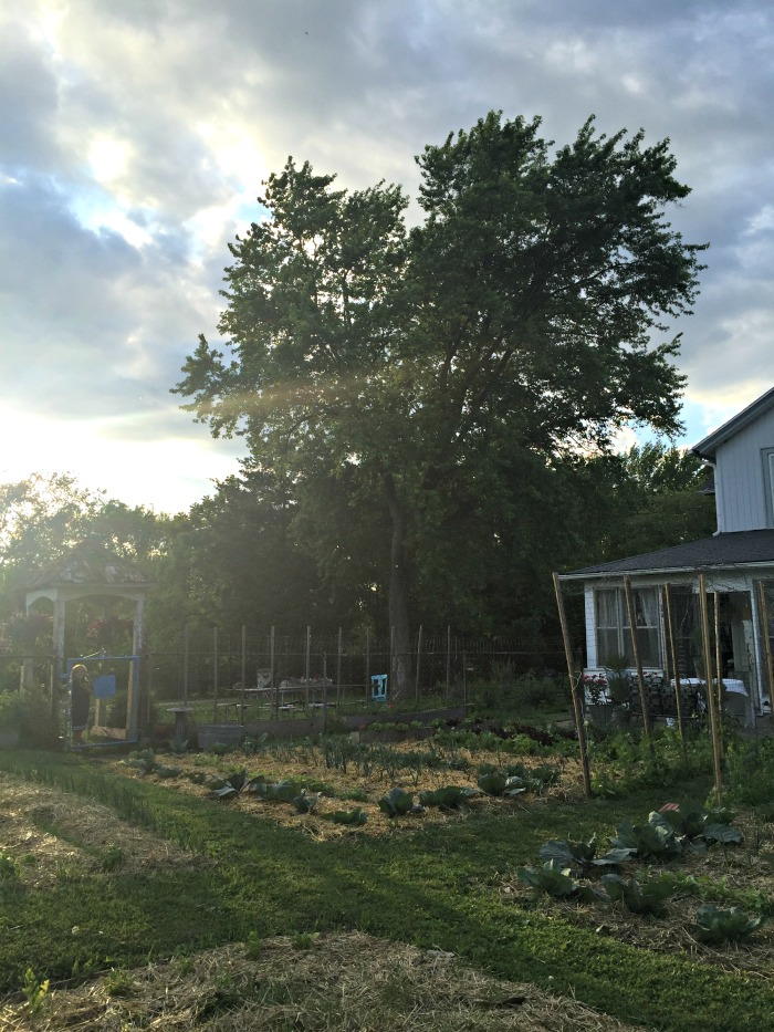 Jardin Potager at Dusk - Pregnancy Update
