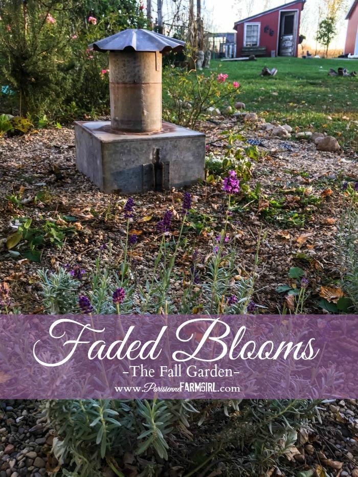 Fall Garden…November's Faded Blooms